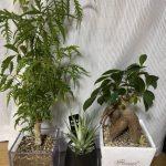 私の観葉植物🍃